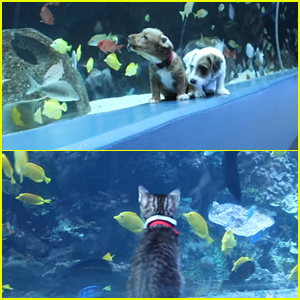 Puppies & Kittens Visit Georgia Aquarium During Closure - See The Videos!