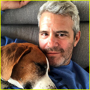 Andy Cohen's Dog Wacha Has Been Rehomed for His Son Ben's Safety