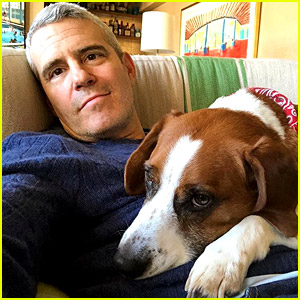 Andy Cohen Gives Update on His Dog Wacha, Explains Why He Was Rehomed