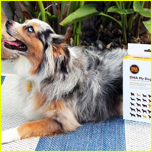 Find Out More About Your Dog's Breed & Health With This DNA Kit!