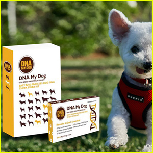 Uncover Your Dog's DNA Details With the DNA My Dog NextGen Test & Save 30%