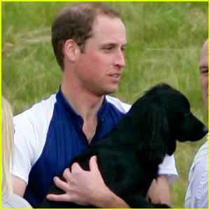 Kate Middleton & Prince William's Dog Lupo Has Passed Away