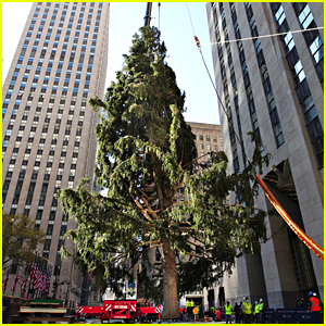 An Owl Stowed Away On The Rockefeller Christmas Tree!