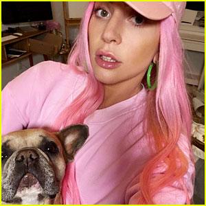 Lady Gaga's Dogwalker Shot, Two of Her Dogs Stolen By Gunman